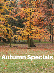 the nicholas hotel prague autumn specials